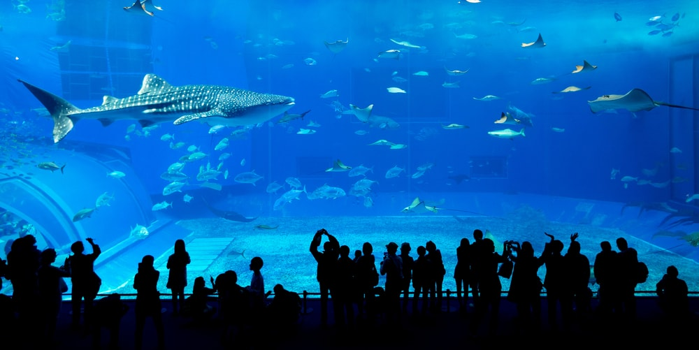 [A] Where is the world's largest aquarium?